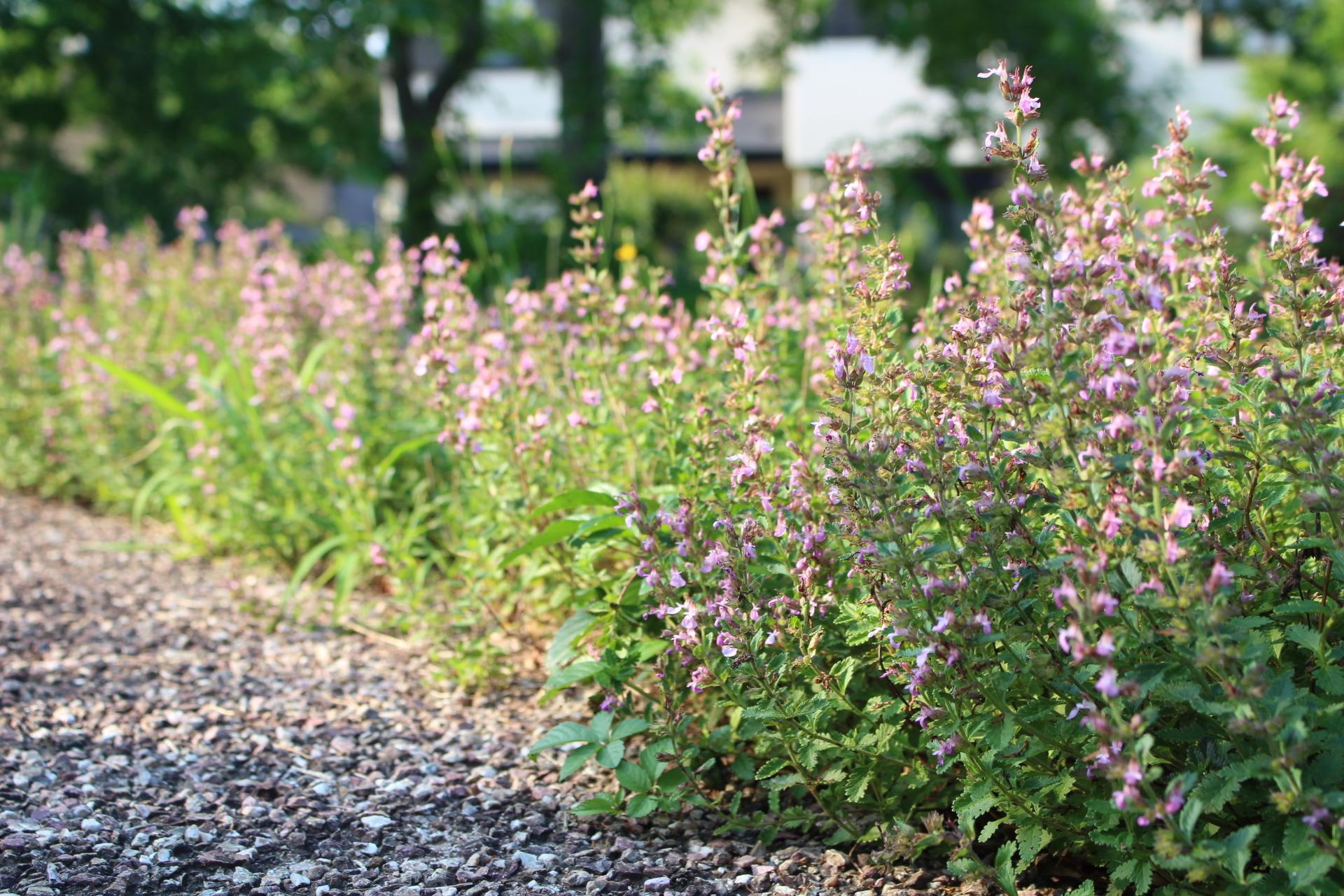 https://www.treeoflife.co.jp/garden/news/images/3141a9330ebd9d22de976f2e6aeb38a7c471db22.JPG