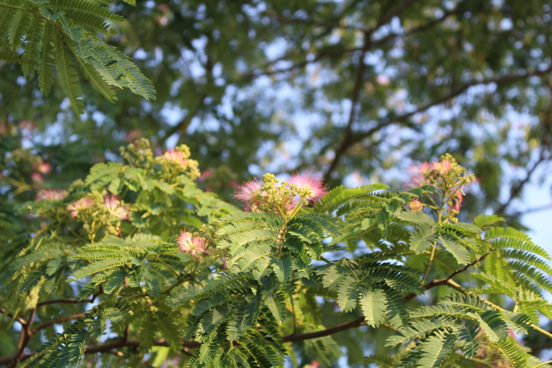 https://www.treeoflife.co.jp/garden/news/images/5d74947598a02193478976ea1cf93357594bcb8f.JPG