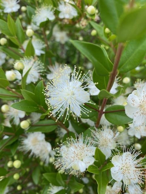 https://www.treeoflife.co.jp/garden/news/images/IMG_2609.jpg