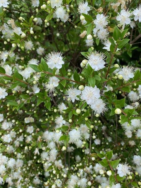 https://www.treeoflife.co.jp/garden/news/images/IMG_2611.jpg