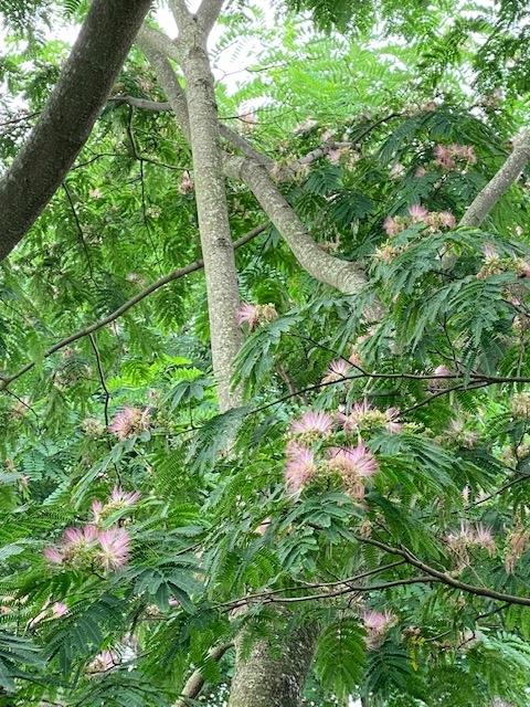 https://www.treeoflife.co.jp/garden/news/images/df7e899efbf7b227fbce284d28008dbf78560568.jpg